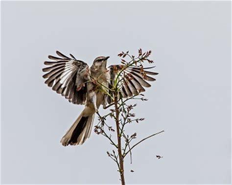 Critical essay of to kill a mockingbird